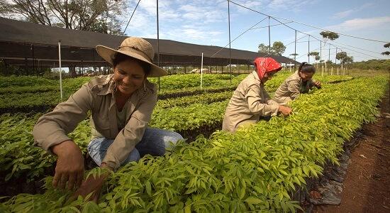 trädplantering tropical mix klimatkompensera