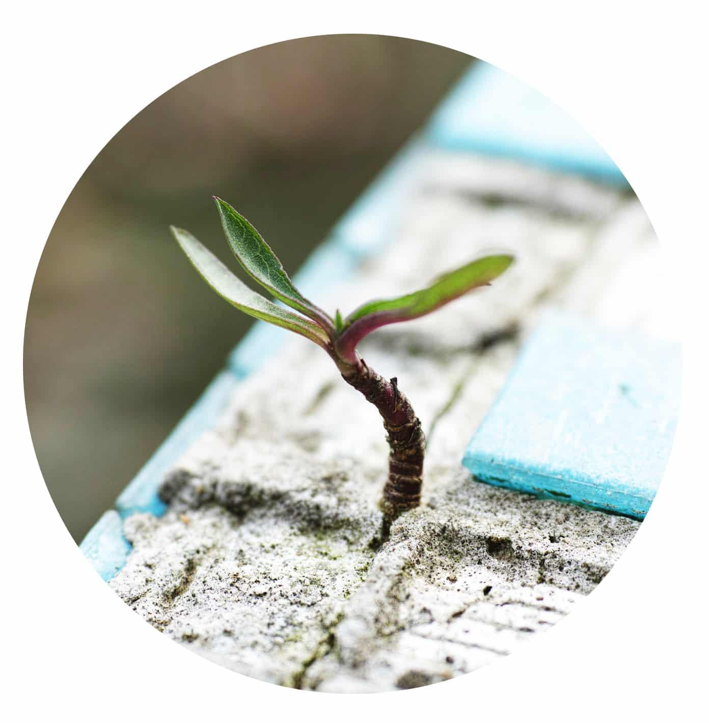 utsläppsrätter växthuseffekten